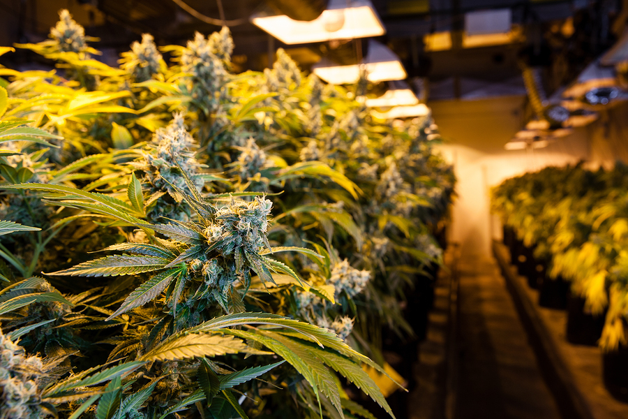 5 Simple Ways to Make Good Money in the Cannabis Business